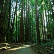 MuirWoods