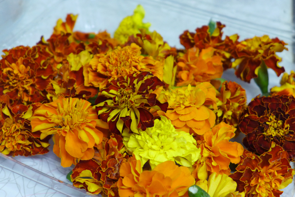 Cempazuchitl | Marigolds
